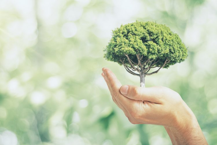 How Your Business Can Go Greener